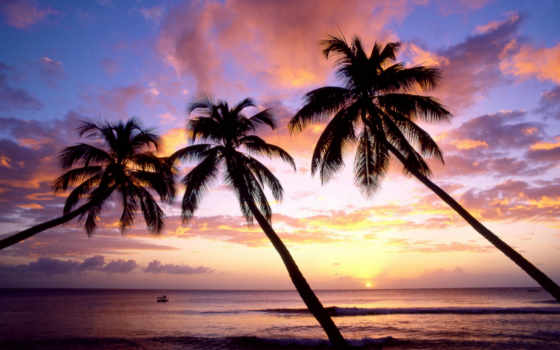 palm, три, слово, закат, wise, побережье, море, стать
