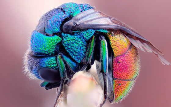 радуга, макро, пчелка, fly, freeze, wet, коллекция