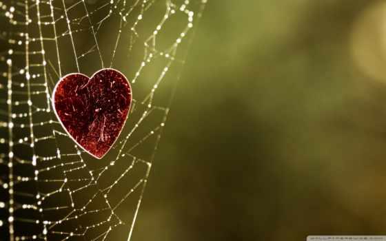 сердце в росной паутине