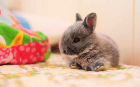 кролики, desktopwallpape, коллекция, картинок, зайцы,