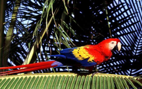 красивые, птицами, ara