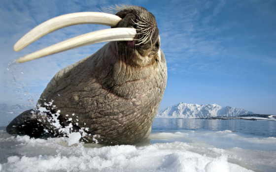 zhivotnye, животных, антарктиды