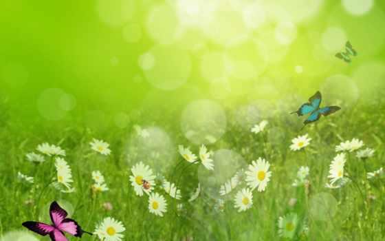 summer, природа, года, time, картинка, трава, ромашки, бабочки,