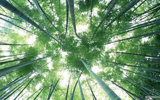 лес, бамбук, сагано, kyoto, зелёный, japanese, жидкие,