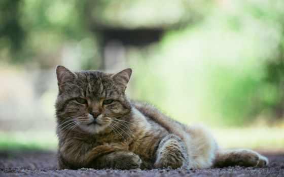 свет, взгляд, кот, июл, кошки, природа, морда, fone, tweets, размытом, ravensbury,