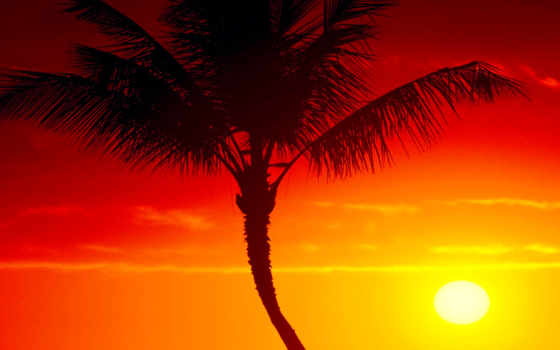 hawaii, summer, ozadja, maui, free, страница, качество, sun, закат,