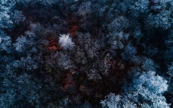 , лес, зима, с верху,