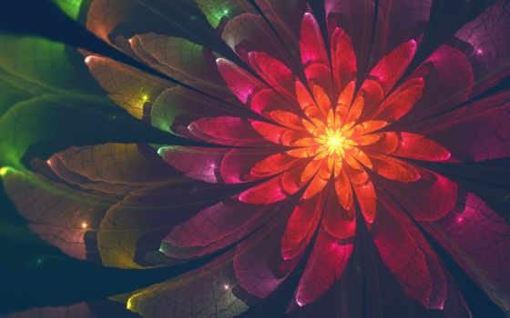desktop, цветы, high