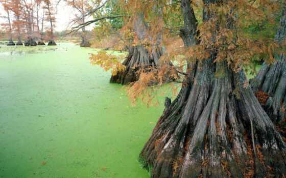 swamp, озеро, mobile, природа, tennessee, tiptonville, близко, тигр, smartphone