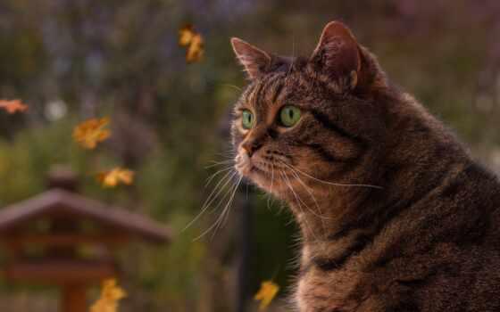 осень, кот, popularity, random, pet, color