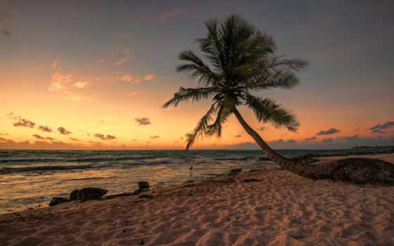 tropical, desktop, nature, best, beach, free, download,
