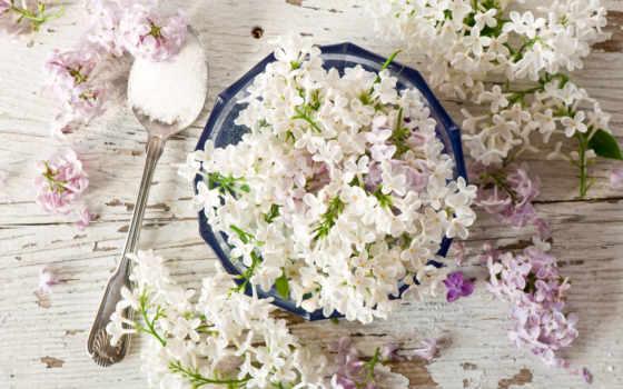 цветы, сиреневый Фон № 100152 разрешение 2560x1600
