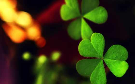 clover, зелёный, макро, лист, листочек, растение, цветы,