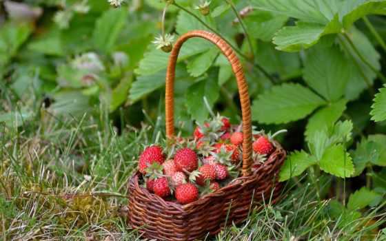 pulpit, корзина, ягоды, poziomki, tapety, праздники, картинка, new, клубника, berries,