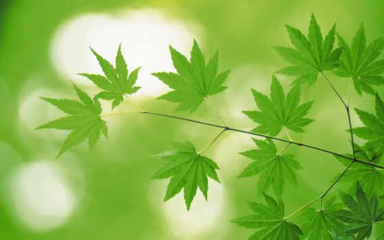 зелёный, природа, листва, landscape, сочная, коллекция, зелёная,