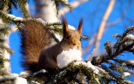 winter, she, поднимут, настроение, волшебные, которые, зимой, вдвойне, восхитительна,