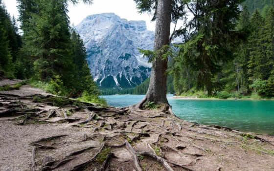 лес, shirokoformatnyi, коллекция, природа, trees, play