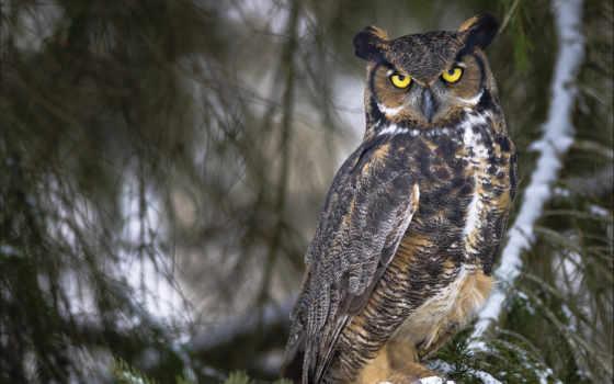 owl, животные
