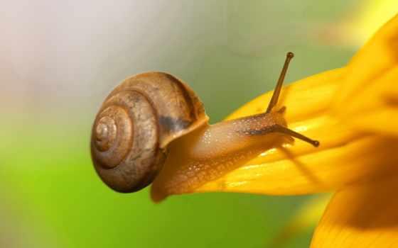 بيدروسا, snail