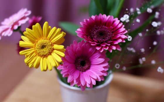 герберы, cvety, рисунки