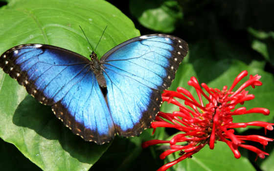 free, бабочка, shutterstock