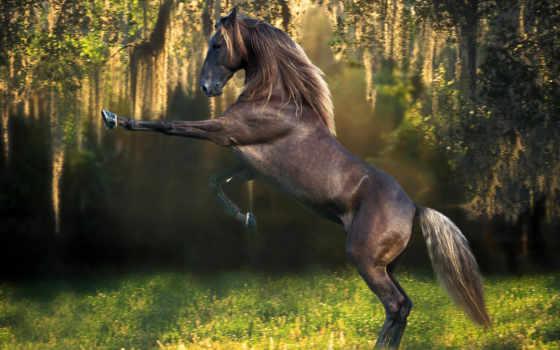 лошадь, кони, лошади