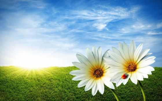 весна, flowers, трава