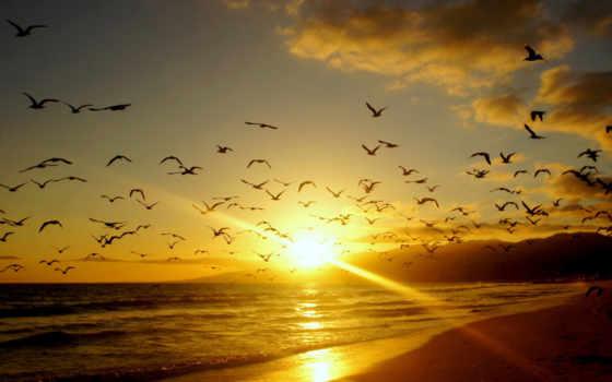овцы, птицы, птиц, берег, небо, природа, закат, sun, побережье, песок, oblaka,