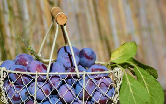 фрукты, слива, фоны, mobile, акцент, browse, страница, iphone, телефон, еда,
