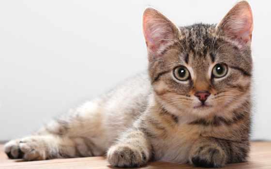 кошки, кот, котенок, мире, лежит, самые, самый, милые,