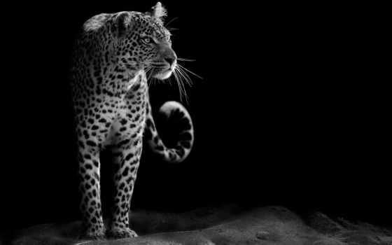 id, zhivotnye, гепард, мужчина, россия, вк, лет, gepard, цена, когда,