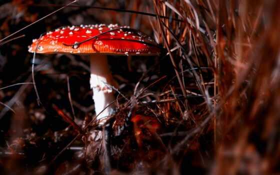 mushroom, планшетный, cover, smartphone