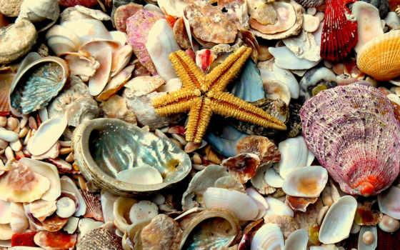 ракушки, морские, красивые,