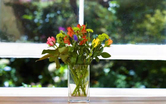 цветы, окно, ваза, взгляд, подоконник, зелёный,