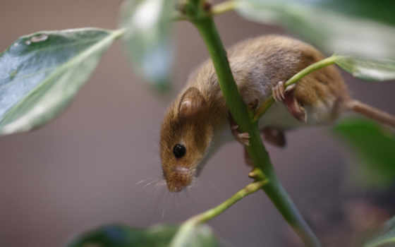 branch, коллекция, мыши