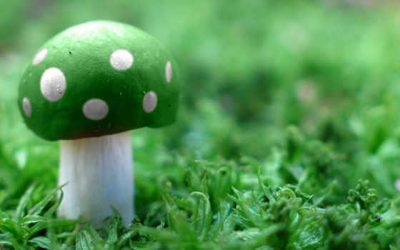 грибы, мухомор, mushroom