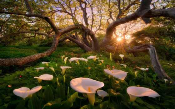 flores, paisajes, del
