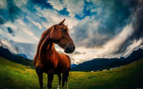 paisajes, caballos, imagenes, con, bonitas, naturales, estas, que,