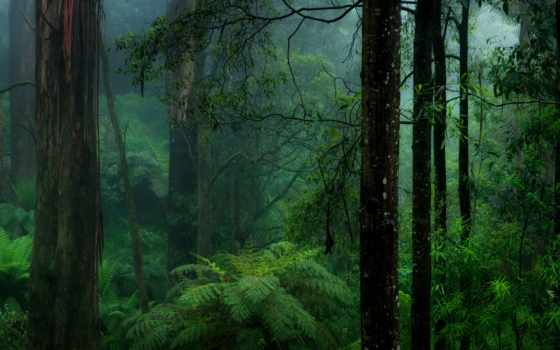 лес, пользователя, природа, яndex, ultra, коллекция, папоротник,