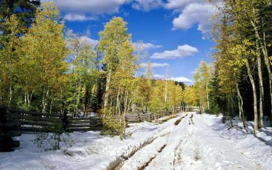 лес, весна, снег, trees, подснежники, дорога, листва, березы, желтые,