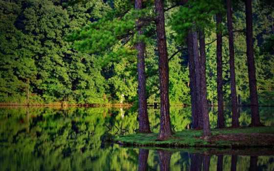 озеро, природа, коллекция, лес, яndex, trees, озера, коллекциях, леса, nwooleg,