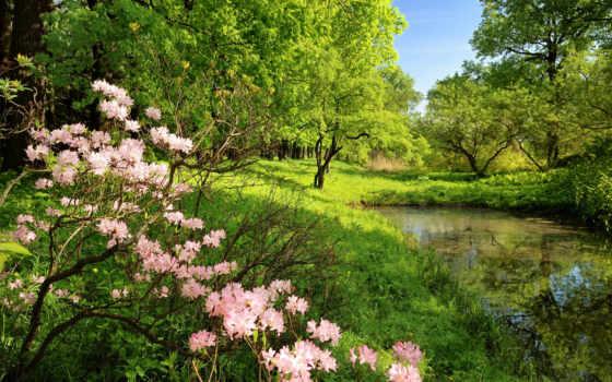 garden, botanical, санкт, петербурге, пользователя, саду, exposition, константа, ботаническом, коллекция, яndex,