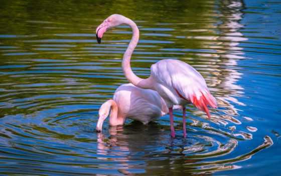 фламинго, puzzle, птицы, zhivotnye, collect, картинка, online, модульная, животных,