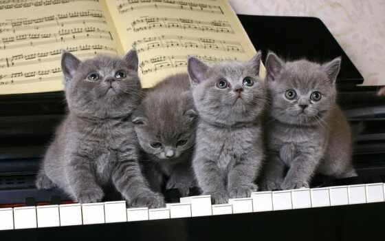 postcard, котенок, gallery, друг, website, поздравить, поздравление, однокурсница, viber, кот