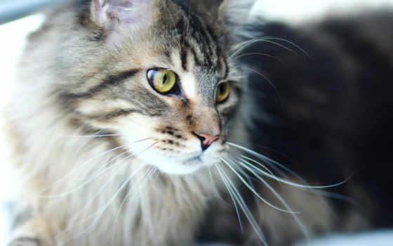 кот, тюлень, kun, mein, хищник, купить, фотообои,