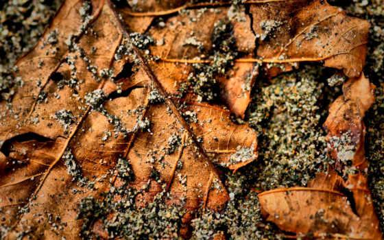 камешки, листки, лист, листва, камни, макро,