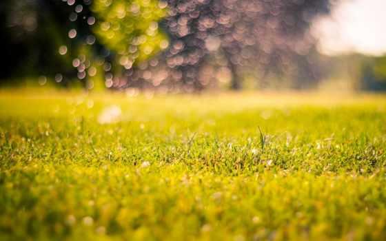 природа, макро, трава, фон, утро, день, размытость, размытие,