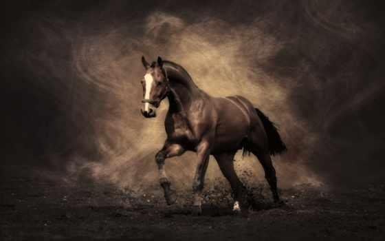 лошадь, grace, лошади, мире, stallion, тегом, фоновые, рисунки,