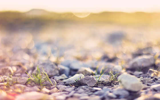 трава, природа, камни, блики, макро, свет, trick, размытие,