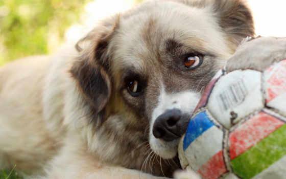собаку, собаки, они, сокровищем, владеет, having, могут,